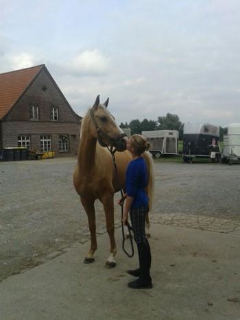 Top Zafiro Van Sophia Burbaum Horse Of The Month Harrys Horse